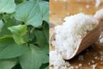 Giúp da bạn trắng mịn sạch mụn với rau diếp cá